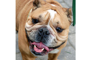 pet-a-palooza in briarcliff manor