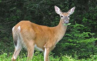 deer resistant gardening program at Warner Library