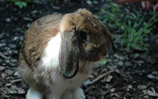 Bunny Hop March 3