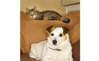 free rabies clinic in cortlandt manor