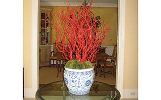Around the House Interior Plants
