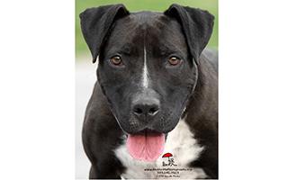 Pets Alive Westchester Rosie