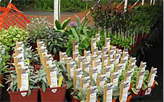 Teatown Plant Sale May 9 & 10