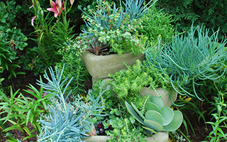 Succulents stacked in troughs or pots can create a desert type feel in the landscape.