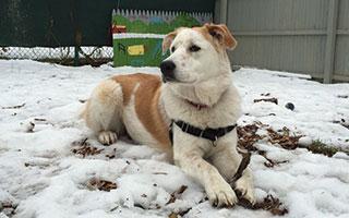 Maddie SPCA