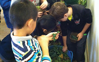 Students from Main Street School got their hands dirty during a visit to Stone Barns.