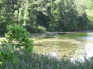 Tarrytown Lakes overgrown with acquatic plants and algae blooms