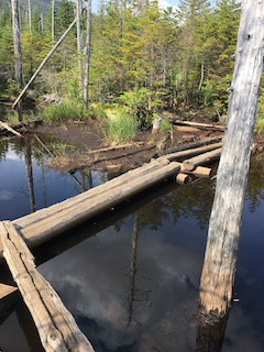 Old log bridges just past Lake Arnold used to cross the always flooded terrain