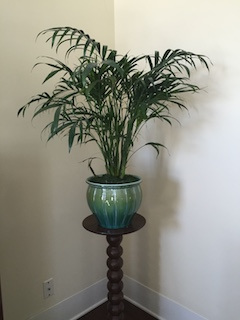 Let Plants Breathe Life into Your Home this Spring – River Journal