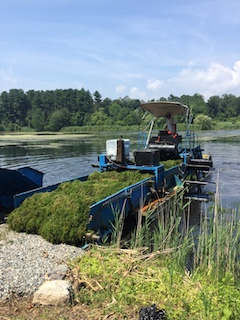 Raking and harvesting milfoil.