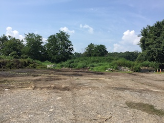 Mounds of milfoil grass at Tarrytown Dump (Before)